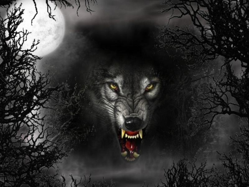 Lobo y Luna_800