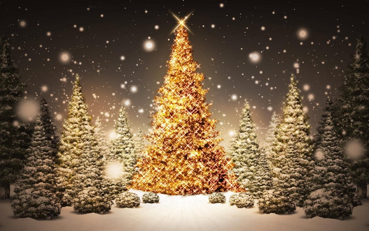 Mjestuoso arbol de navidad encendido con muchisimos foquitos